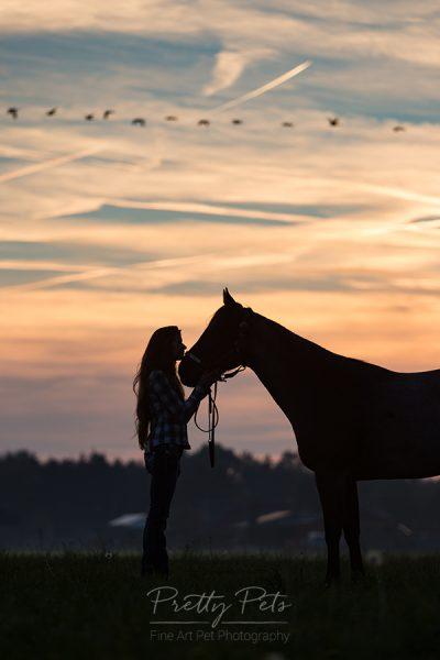 paardenfotografie silhouet