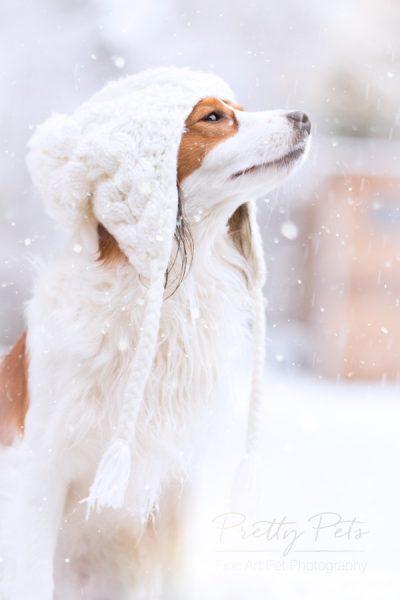 hondenfotografie Kooikerhondje in de sneeuw