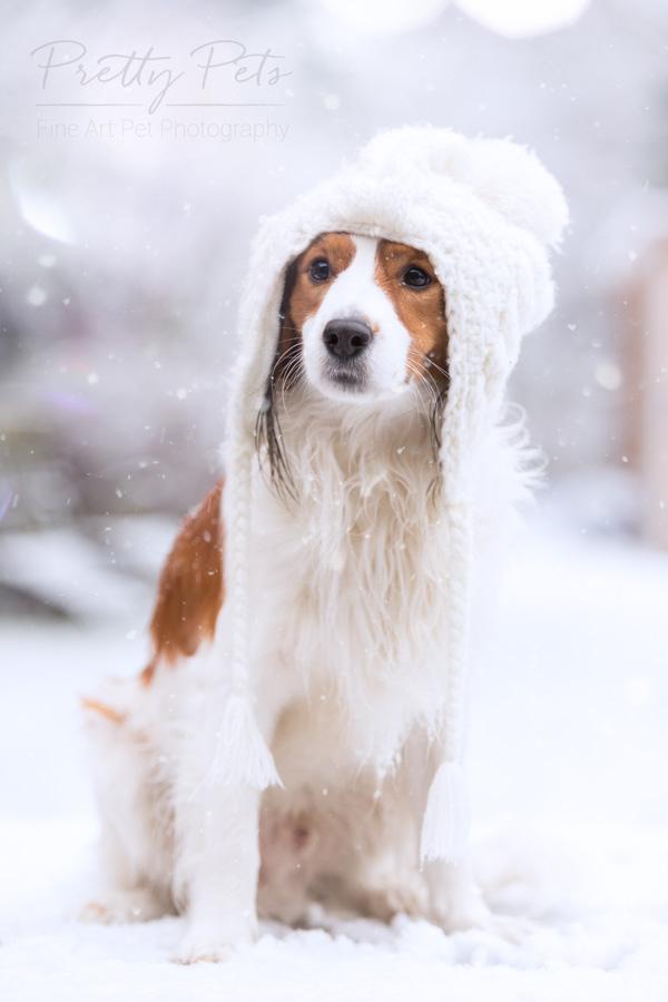 hondenfotografie Kooikerhondje sneeuwpret