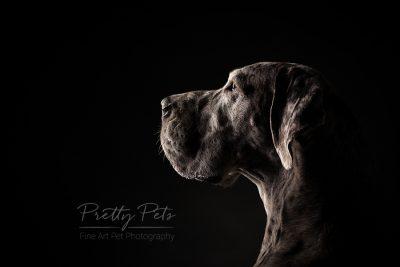 hondenfotografie Duitse Dog