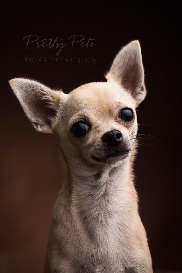 info hondenfotografie