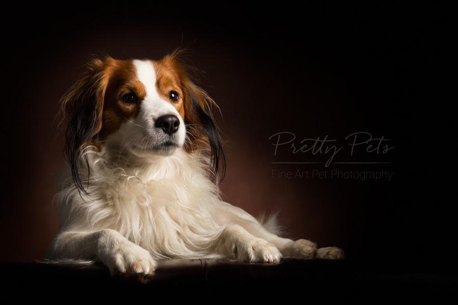 hondenfotografie Kooikerhondje