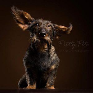 portfolio hondenfotografie