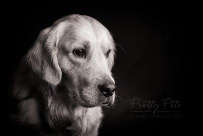 zwart wit hondenfotografie labrador