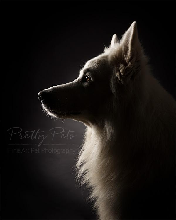 silhouette hondenfoto zwitserse herder