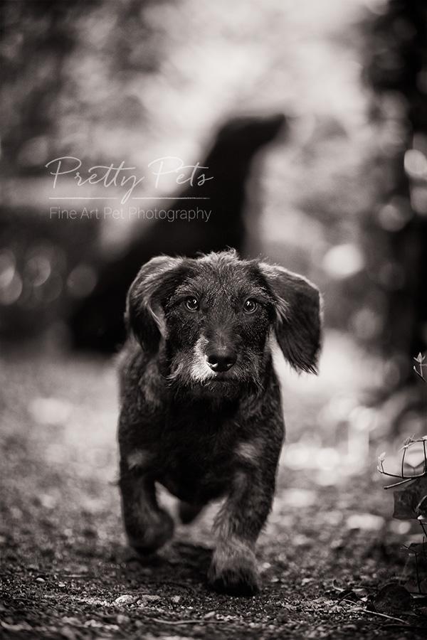 hondenfotografie teckel buiten
