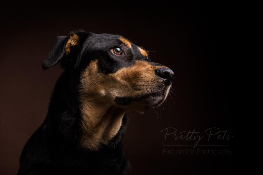 hondenfotografie portret
