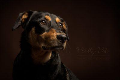 hondenfotografie studio