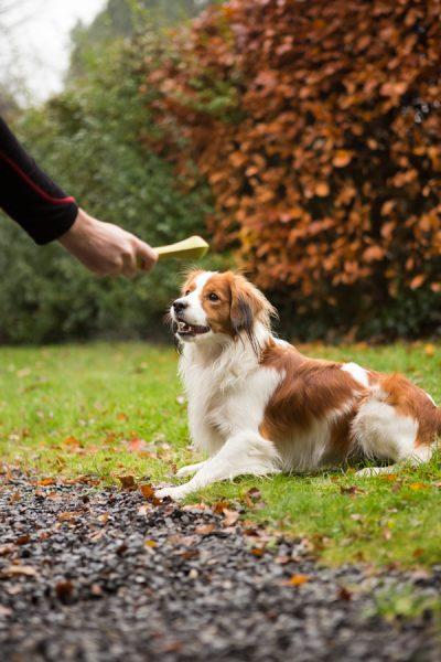 hond stimuleren tijdens fotoshoot met speeltje