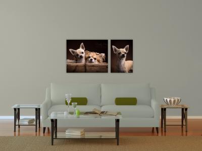 wandcollectie hondenfotografie Chihuahua