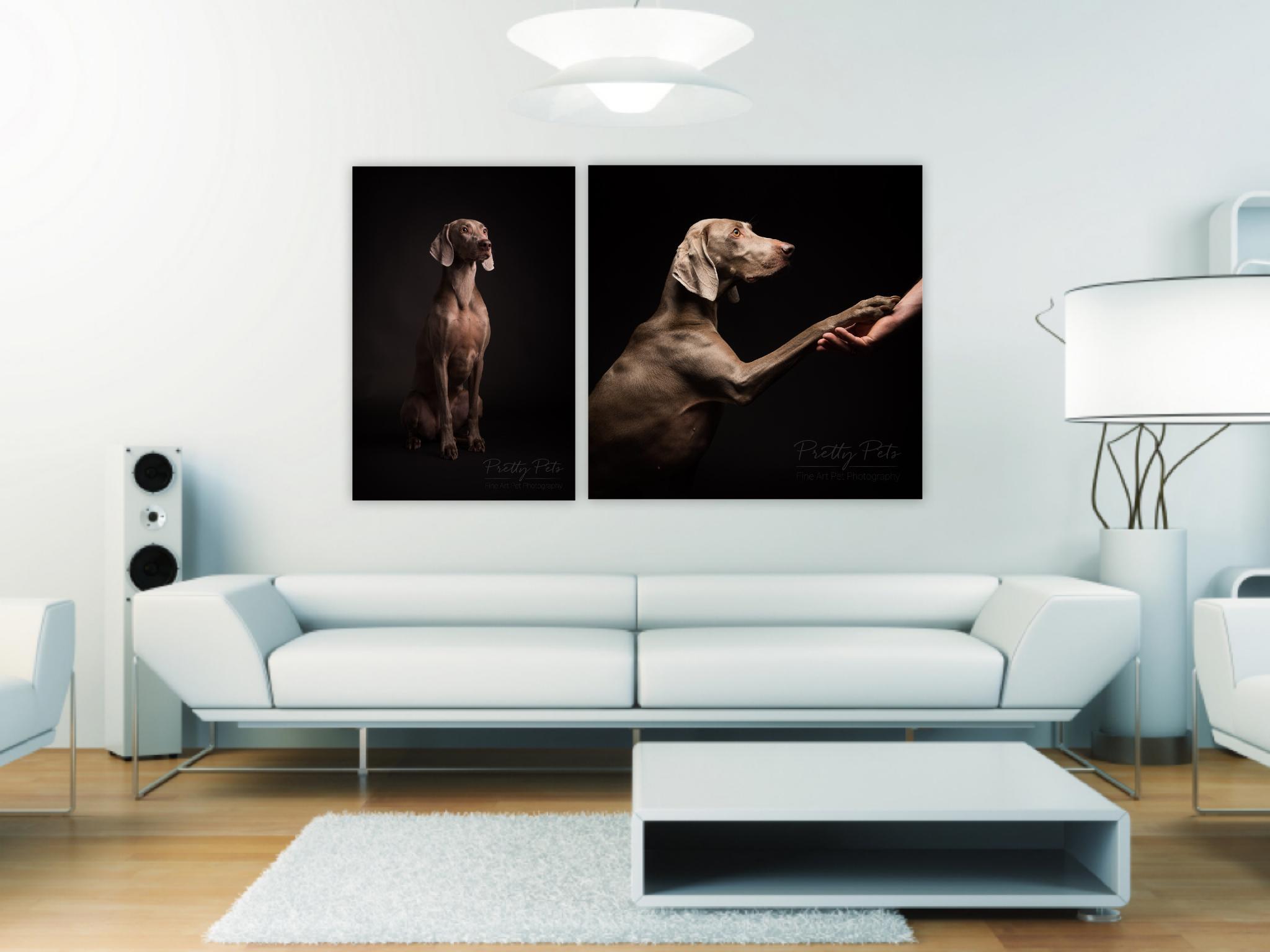 wandcollectie hondenfotografie Weimaraner